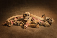 Still life with skulls and bones. Warm tone stock photo