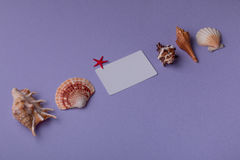Still life of small gift card and marine things. Summer background: Close-up of gift card mock-up and seashells on purple. Top view stock image