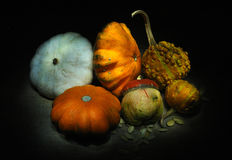 Still life with small pumpkins Royalty Free Stock Images
