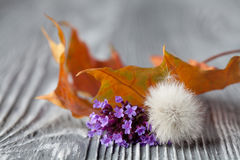 Still life with small violet flowers, dandelion and orange maple leaf on gray wooden background. Shallow depth of field Royalty Free Stock Photo