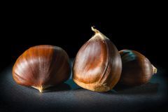Still life of some chestnuts on a black background. Still life of three chestnuts on a black background Stock Image
