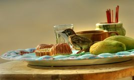 Still-life with a sparrow-2. Sparrow photographed in Phuket. Thailand royalty free stock photos