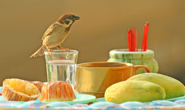 Still-life with a sparrow. Sparrow photographed in Phuket. Thailand royalty free stock image