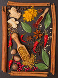 Still life with spices and herbs in the frame Royalty Free Stock Images