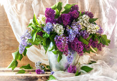 Still life sprigs lilac thriving Stock Photography