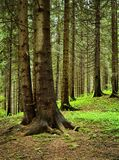 Still life in the spruce forest Stock Photos