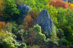 Still life with stone and colored trees. In high mountains of Crimea Royalty Free Stock Images