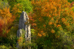Still life with stone and colored trees. In high mountains of Crimea Stock Images