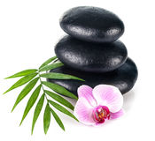 Still life with stone for spa and flower orchid Stock Photography
