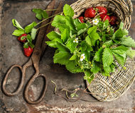 Still life with strawberries, flowers and leaves on rustic backg Royalty Free Stock Photo