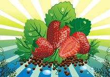 Still life - strawberries on the vine leaves Royalty Free Stock Photo