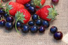 Still life strawberry with black currant royalty free stock photos