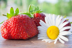 Still life with strawberry and a camomile Royalty Free Stock Photo