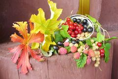 Still life on the stump, in a Cup with branches of red, white an. D black currants, raspberry berries with them. Visible carved maple leaves Stock Image