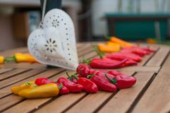 Still life. Chilli peppers in summer stock image