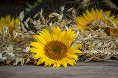Still Life Of Summer Harvest Stock Image