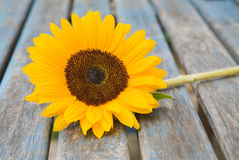 Still life with sunflower Royalty Free Stock Photo