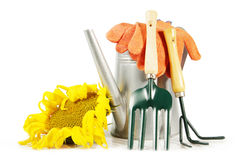 Still life with sunflower and gardening tools isolated on white Stock Images