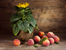Still life with sunflower and peaches Royalty Free Stock Image