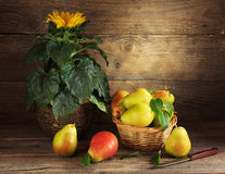 Still life with sunflower and pears Stock Photography