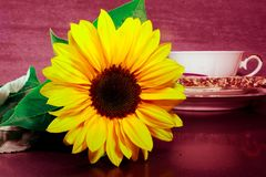 Still life with sunflower Royalty Free Stock Photos