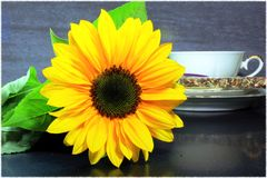 Still life with sunflower Stock Photo
