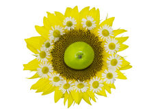 Still life with sunflower. S, daisies and apple on a white background, clipart Royalty Free Stock Images