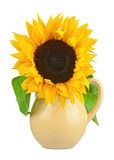 Still life with sunflower in vase isolated on white background. Stock Images