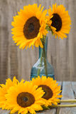 Still life with sunflowers. In blue glass decanter set outside on old garden table Stock Photography
