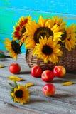 Still life of sunflowers. Apples Stock Photos
