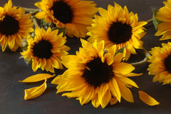 Still life of sunflowers. Apples Royalty Free Stock Photo