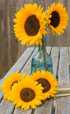 Still life with sunflowers in blue glass decanter,. Set outside on old garden table Stock Images