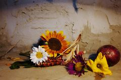 Still life with sunflowers and daisy on wooden floor. Still life with sunflowers and daisieson wooden floor, concrete wall background Royalty Free Stock Images