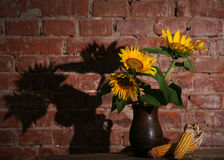 Still life with sunflowers and dry harvested corn. On a brick wall Stock Photo