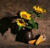 Still life with sunflowers and dry harvested corn. On a wooden background Royalty Free Stock Photography