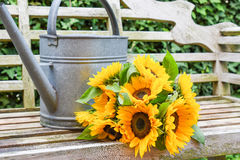 Still life with sunflowers. Fresh bunch of sunflowers and antique zinc watering can on wooden garden bench. Summer concept Stock Photos