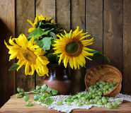 Still life with sunflowers and gooseberry. Still life with sunflowers in a clay pot and gooseberries on the background of boards Stock Photos