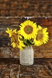 Still life. Sunflowers in a homemade vase on a dark wooden background. Sunflowers in a homemade vase on a dark wooden background. Still life Royalty Free Stock Photography