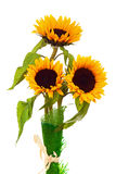 Still Life with Sunflowers Isolated on White Background. Closeup Royalty Free Stock Photos