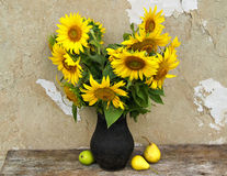 Still life with sunflowers and pears. On the background of the old house wall Royalty Free Stock Photography