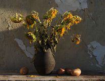Still life with sunflowers and potatoes. Still life with withered sunflowers and potatoes on the background of the old house wall Royalty Free Stock Photography