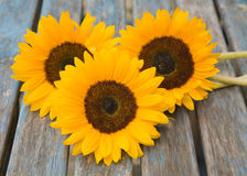 Still life with sunflowers set outside. On old garden table Royalty Free Stock Photo