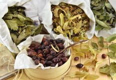 Still life with sweetbrier berries and dried healing leaves Royalty Free Stock Photos