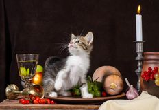 tabby kitten sitting and playing in a clay plate on a dark backg royalty free stock photography