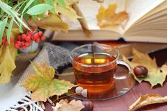 Still life with tea, books and leaves in autumn Stock Images
