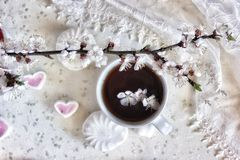 Still life. Three apricot flowers in a cup of coffee, apricot branch and marshmallows, top view Royalty Free Stock Photography