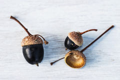 Still life with three black acorns Stock Images
