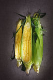 Still life with three indian corn ears Royalty Free Stock Photography