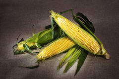 Still life with three indian corn on gray linen Royalty Free Stock Photos