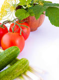 Still-life from a tomato, a cucumber, and onions w. Ith a flower and green leaves Royalty Free Stock Image